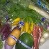横浜の朝どれ野菜入荷しました。の画像