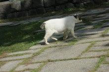 $ワットのブログ-通りすがりの猫