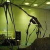 恐竜は生きている?の画像