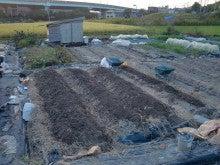耕作放棄地を剣先スコップで畑に開拓!有機肥料を使い農薬無しで野菜を栽培する週2日の農作業記録 byウッチー-131028ウッチー式・今日の農作業の出来栄え04