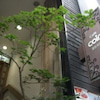 Seoul (2)の画像