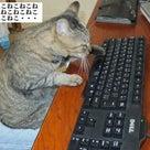猫の手を借りてます 執筆中^^;の記事より