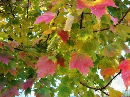 i Canada☆ベテランカウンセラーのいるバンクーバー無料現地留学エージェントのブログ-Oct 29'13 ⑨ i Canada