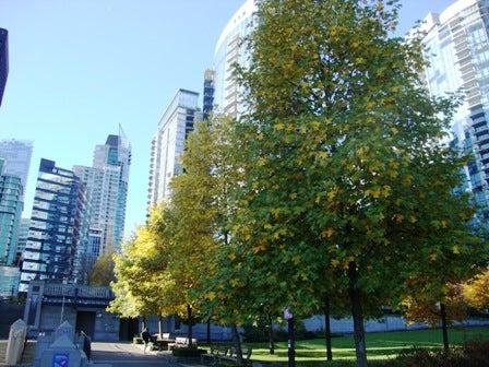 i Canada☆ベテランカウンセラーのいるバンクーバー無料現地留学エージェントのブログ-Oct 29'13 ⑥ i Canada