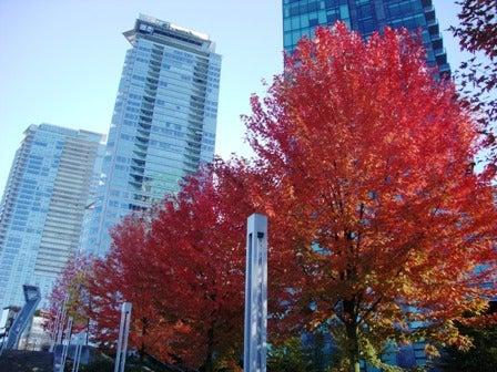i Canada☆ベテランカウンセラーのいるバンクーバー無料現地留学エージェントのブログ-Oct 29'13 ⑧ i Canada