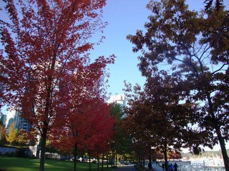 i Canada☆ベテランカウンセラーのいるバンクーバー無料現地留学エージェントのブログ-Oct 29'13 ⑦ i Canada