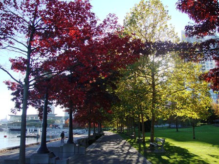 i Canada☆ベテランカウンセラーのいるバンクーバー無料現地留学エージェントのブログ-Oct 29'13 ③ i Canada