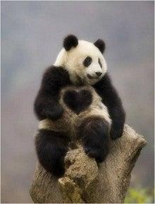 恋愛運アップの待ち受け「ハートのパンダ」   90日で幸せな恋愛をつかむ! ハッピーマニアの恋愛運・結婚運アップ