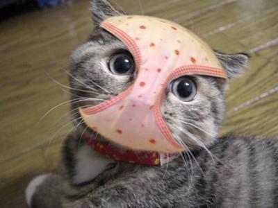 可愛い猫ちゃん達の画像をアップで~す(^-^)