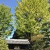 足利学校と渡良瀬渓谷に行って来ましたの画像