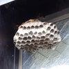 蜂の巣のその後の画像