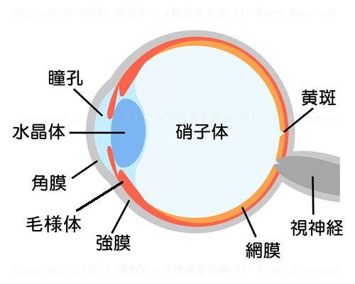 目の構造と働き