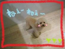 """トリマーERIのblog """"めっちゃ可愛くするけんネ''"""