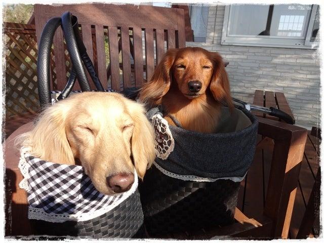 旅犬Lani&Leaのほほん風船記-shigezo