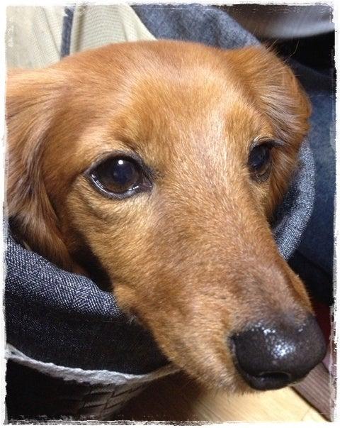 旅犬Lani&Leaのほほん風船記-亀島亭