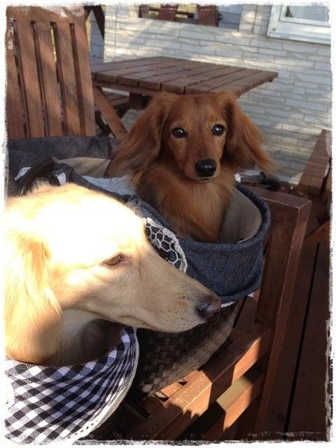 旅犬Lani&Leaのほほん風船記-11.1-4石川帰省