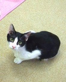 猫カフェ 浅草ねこ園ブログ 里親募集中!