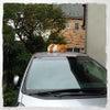『車の上のニャンズ』^〜^♪の画像