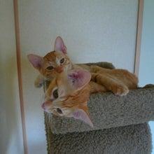 にちゃとら~みるげんネコ猫ランド~-なかよしタワー