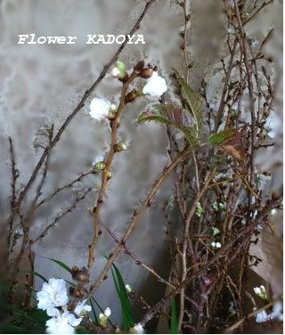 ワレモコウ~感謝 福井市のお花屋さんブログ-冬桜