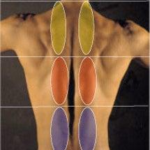 背骨・骨盤と痛みの関…