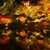 高台寺 紅葉ライトアップの画像