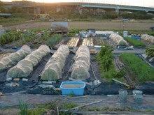 耕作放棄地を剣先スコップで畑に開拓!有機肥料を使い農薬無しで野菜を栽培する週2日の農作業記録 byウッチー-131112ウッチー式・今日の農作業の出来栄え02