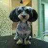 MIX犬種(ペコちゃん)のトリミングをしましたの画像