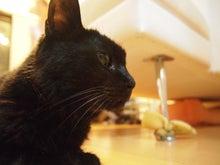 にちゃとら~みるげんネコ猫ランド~-くろ表紙