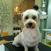 MIX犬種(ムムちゃん)のトリミングをしましたの画像