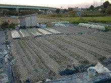 耕作放棄地を剣先スコップで畑に開拓!有機肥料を使い農薬無しで野菜を栽培する週2日の農作業記録 byウッチー-131119ウッチー式・今日の農作業の出来栄え04