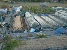 耕作放棄地を剣先スコップで畑に開拓!有機肥料を使い農薬無しで野菜を栽培する週2日の農作業記録 byウッチー-131119ウッチー式・今日の農作業の出来栄え01