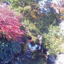 紅葉見ながらお散歩