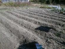 体験農園園主の畑日記