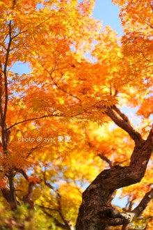 京都散歩の旅-嵐山の紅葉、見頃です