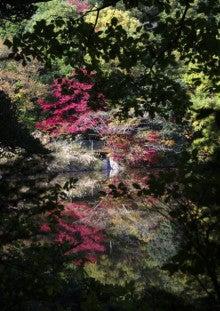πのブログ-新池の紅葉2