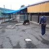 高崎市 前橋市 犬のしつけ 勉強会の画像