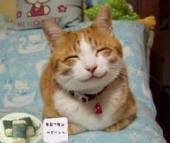 徳島を元気に!マスエージェントスタッフの徒然日記