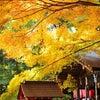 嵐山・嵯峨野の紅葉の画像