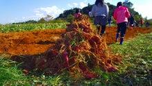 $江ノ村で一人農業