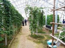 $地域価値創造コンサルタント 須田憲和-バイオマスプラント 温室栽培