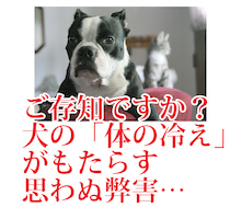 $犬のための手作り食[ぐり通信]公式BLOG