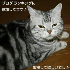 $にゃんことリゾート ECOな暮らし-20131126_160337.jpg