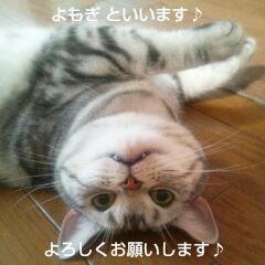 $にゃんことリゾート ECOな暮らし-20131126_160311.jpg