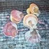 牡蛎のシーズンがやって来ました!の画像
