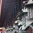 去年の奈良の写真です…