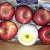 りんご!!の画像