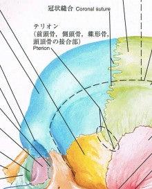 白山オステオパシー院長のブログ  東京都文京区 白山駅より徒歩3分