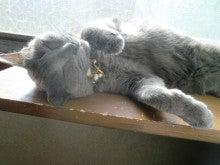 ことぶきTV-猫はひなたぼっこが大好きですねー!