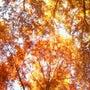 秋はドコ?